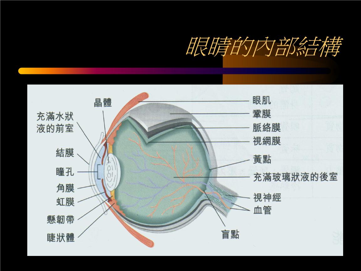 470-眼睛的内部结构.ppt