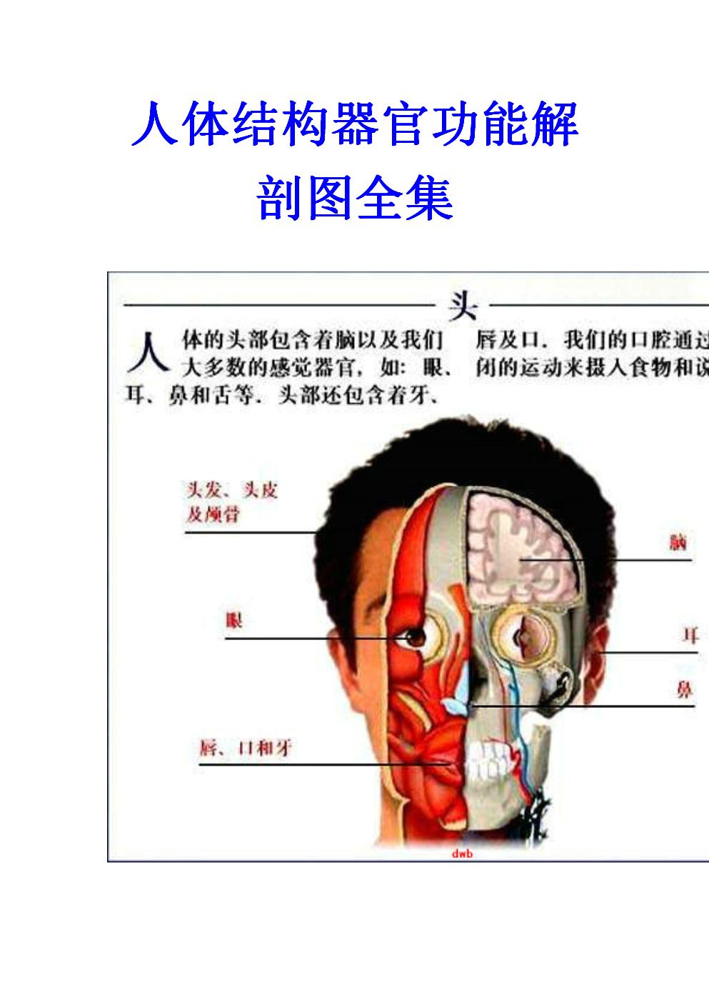 人体结构和功能_人体结构器官功能解剖图全集.doc